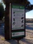Wild species in Villa Borghese gardens